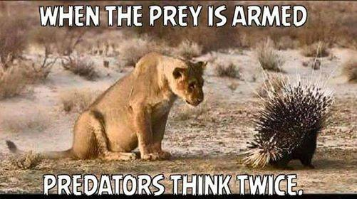 prey-armed-predators-think