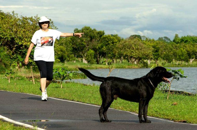 Dilma Rousseff e seu ex-cachorro labrador Nego, enviado ao sacrifício da eutanásia