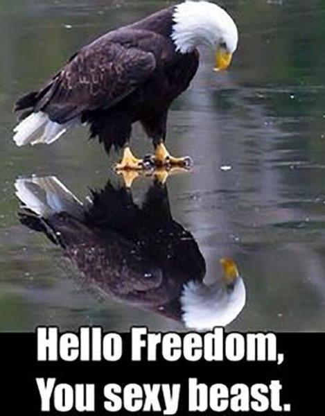Águia - Olá, Liberdade