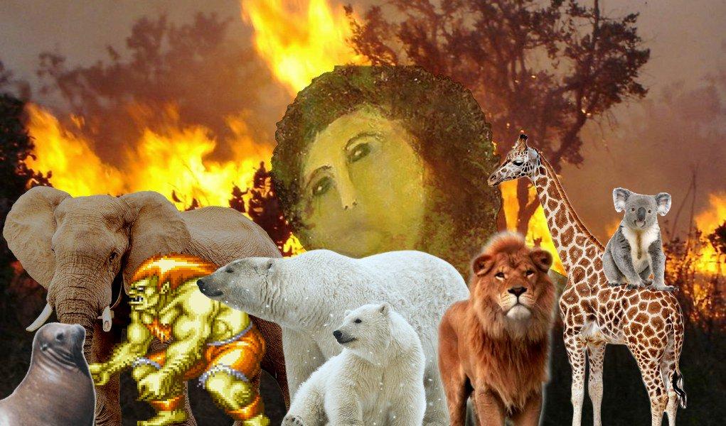 Amazonia, fogo, queimada, desmatamento, #prayforamazon, celebridades, Fake News