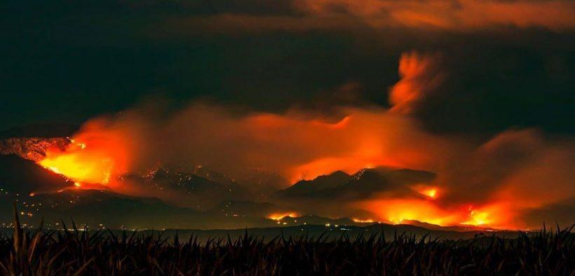 fogo arde california girafas comoção
